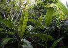 Zag�ada zielonej planety