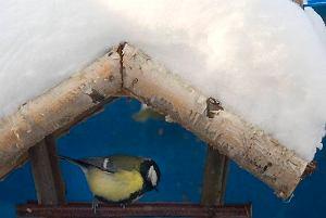 Które ptaki przylatuj� na zim�
