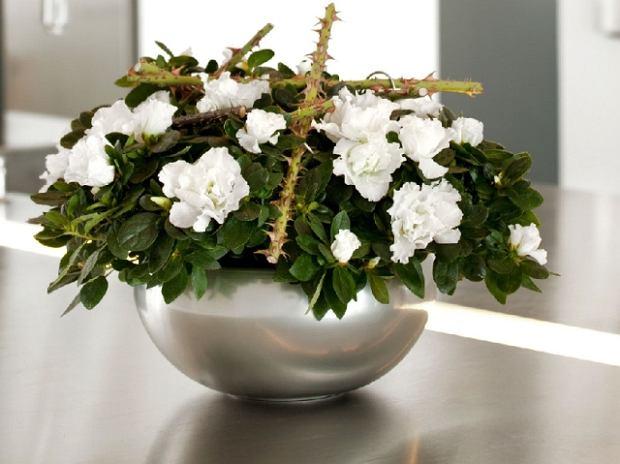 Kwiaty Doniczkowe Kwitnące Zimą Projektowanie Pielęgnacja Porady