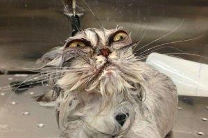 Koty i woda to nie najlepsze połączenie. Te oczy mówią wszystko
