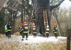 Pali si� d�b Chrobry, jedno z najstarszych drzew Polski. Podpalenie?