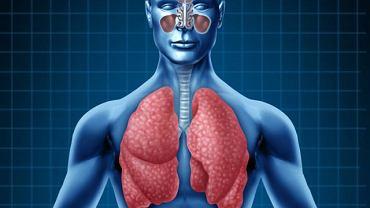 Układ oddechowy to zespół narządów, które umożliwiają  oddychanie