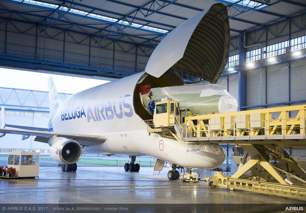 Beluga transportująca sekcję nosową BelugiXL