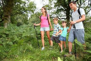6 powod�w dla kt�rych warto spacerowa� po lesie
