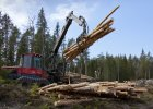Bitwa o drzewa
