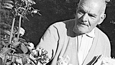 Antoni Lindner postawił sobie cel: tysiąc odmian dalii na tysiąclecie Polski. Tutaj w przydomowym ogrodzie w Rudzie Pabianickiej, lata 60.