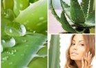 Aloes na odchudzanie. Czy picie aloesu oczyszcza organizm?