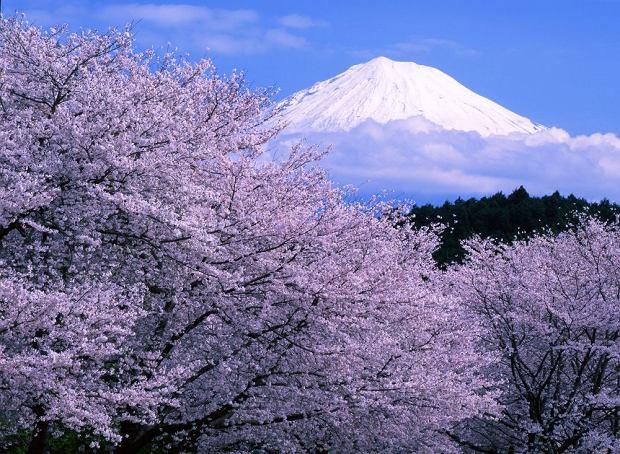 Park Narodowy Góry Fudżi / shutterstock