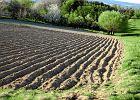 ANR sprzeda�a w 2012 r. 132 tys. hektar�w grunt�w