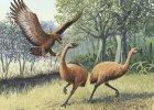 Kiedy wielkie ptaki w�ada�y Ziemi�