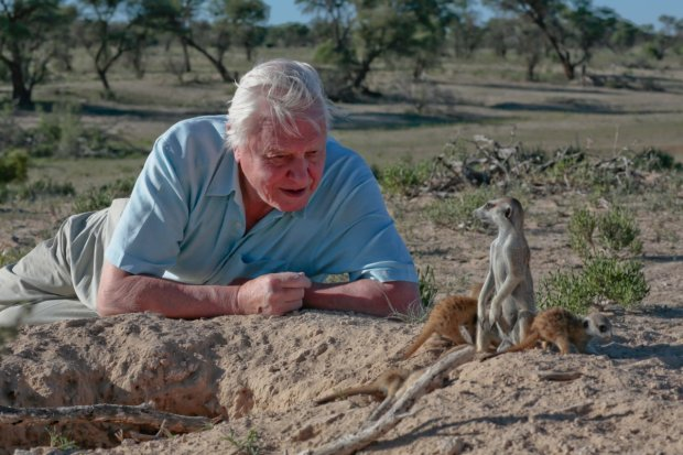 """Najbardziej znany przyrodnik na świecie. Sir David Attenborough jutro w """"Gazecie Telewizyjnej"""""""
