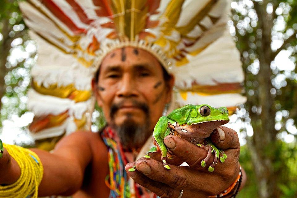 Szaman z żabą kambo, Brazylia
