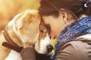 Psy wyczuwaj�, kiedy jeste�my smutni?