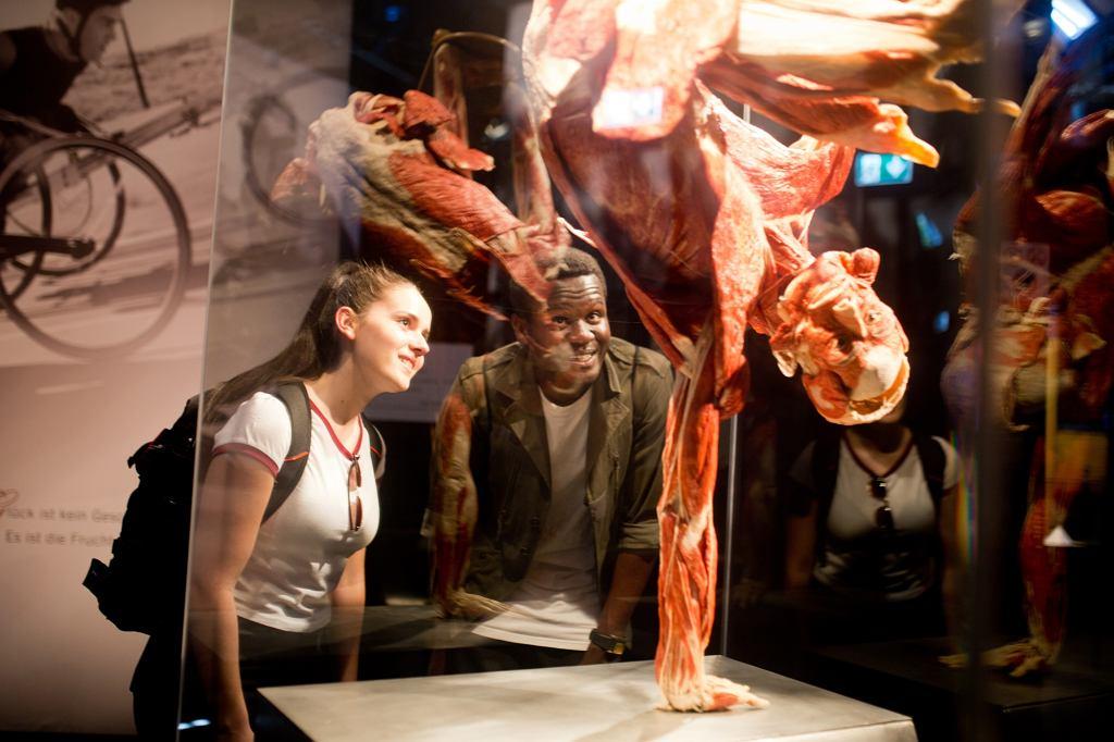 Wystawa Body Worlds /  Gunther von Hagens' KÖRPERWELTEN