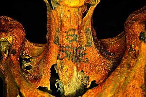 """Ciekawostki naukowe: mumia pokryta tatuażami, burza słoneczna zapisana w drewnie, ołówek w """"Księdze Guinnessa"""""""