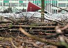 """""""Drzew jest coraz mniej, przegrywaj� z inwestycjami"""", """"Za jedno stare nale�a�oby posadzi� 2,7 tys. nowych"""""""