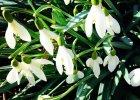 Wiosenne przysmaki