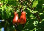 12 warzyw i owoców, które rosną w dziwny sposób