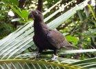 Papugi trą muszle na proszek jak na tarce