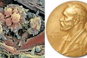 Dla kogo Nobel z medycyny?