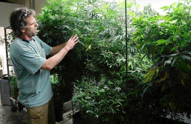 Po Kolorado b�d� nast�pni: Nowy Jork zapowiada legalizacj� marihuany w celach medycznych, Waszyngton...