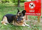 RPO: W Częstochowie łamie się prawa właścicieli zwierząt