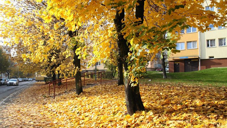Pogoda na wrzesień