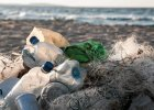 Odkryto pierwsze bakterie, które jedzą plastik. Jak się tego nauczyły?