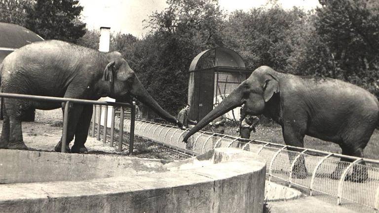 Ucieczka słonicy
