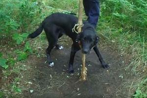 Zostawi� w lesie psa przypi�tego obro�� do drzewa. Pom� go znale��!