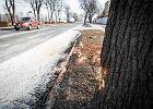 Mieszkańcy Oświęcimia o przejazdach rządowych kolumn: Ścinają ronda, pędzą. Niech się opamiętają