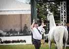 Prokuratura wszczęła śledztwo w sprawie aukcji koni Pride of Poland