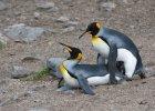 Zdeprawowane pingwiny