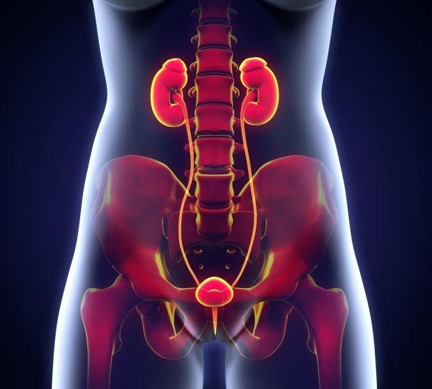 USG układu moczowego