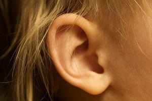 Ucho - odbiera dźwięki i pomaga utrzymać równowagę. Budowa ucha i jego choroby