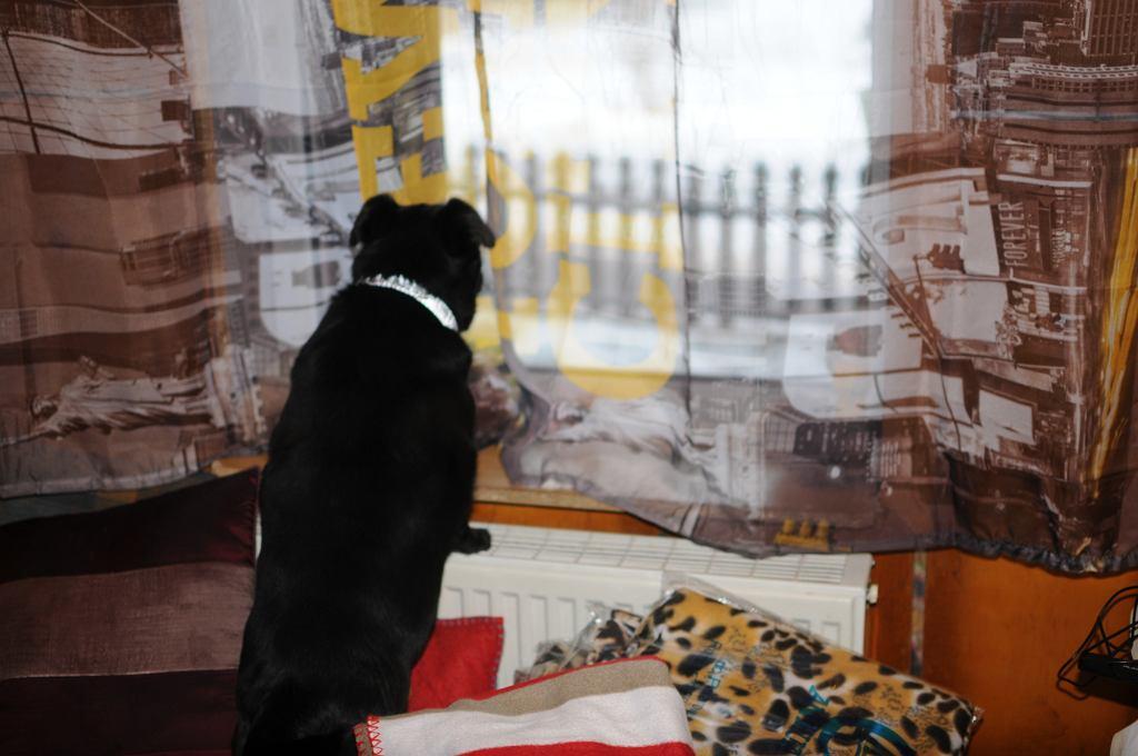 Czasem, niechciane psy, pani Krystyna znajduje... w sieci (fot. Mateusz Witkowski)