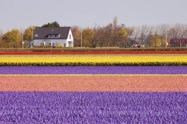 Holandia dojazd