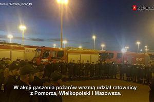 Polscy strażacy witani w Szwecji jak bohaterowie. Pomagają walczyć z gigantycznymi pożarami