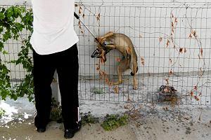 Rumunia wybija psy. Dlaczego Unia powinna protestować?