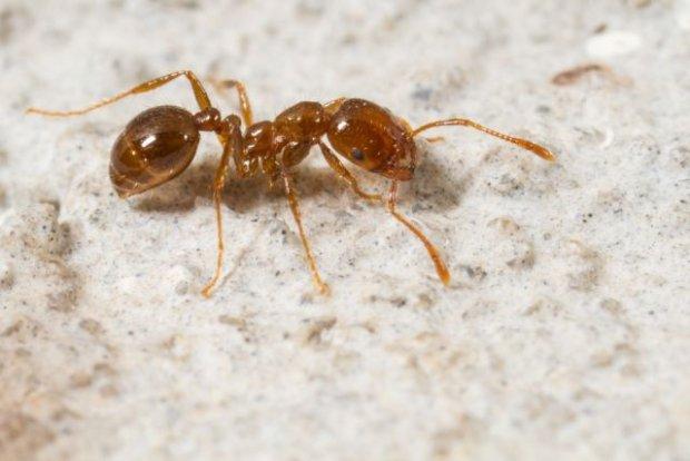 Ugryzienie mrówki - co zrobić?