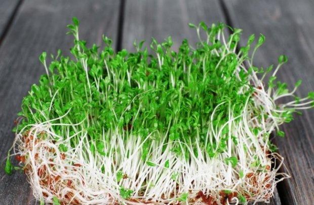 Rzeżucha jest bardzo prosta w uprawie i wymaga niewielkiego nakładu pracy.