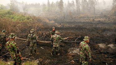 PAŹDZIERNIK. Przez tygodnie trujące dymy unosiły się nad całą Azją Południowo-Wschodnią. Ich źródłem były pożary lasów i torfowisk w Indonezji. Ogień strawił ok. 1,7 mln ha. Dusiła się Indonezja, a także sąsiednie Singapur i Malezja, dym dotarł nad Filipiny i do Tajlandii. Był tak gęsty, że niektóre samoloty czarterowe z turystami musiały zawracać. Połowa z blisko 1,8 tys. pożarów odnotowanych w Indonezji miała miejsce na torfowiskach, które są od lat osuszane i karczowane pod plantacje palm olejowych i produkcję celulozy. W tej części świata pożary wybuchają co roku, gdy nastaje pora sucha. Ogień powinny ugasić deszcze, które zazwyczaj padają od listopada. Jednak rok był wyjątkowo suchy.