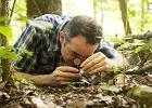 Gdy nie usuwa się drzew, puszcza odnawia się szybciej i zdrowiej - mówi prof. David Haskell. Ma też dobrą radę dla polityków