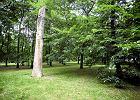 Zreprywatyzowali kawałek parku Rydza-Śmigłego. Wytną drzewa i postawią płot?
