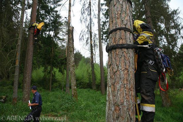Obrońcy przyrody blokują wycinkę Puszczy Białowieskiej, 24 maja 2017