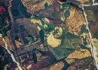 Szalona Gocha. Obraz sprzed prawie 500 lat zainspirował twórców
