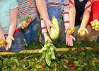 - Zarówno badania brytyjskie, jak i nasze przeprowadzone w CZD, potwierdzają, że dzieci na diecie wegetariańskiej mają prawidłowy rozwój, masę i wysokość ciała - twierdzi Małgorzata Desmond
