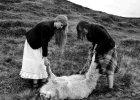 Koniec �wiata Islandczyk�w. Fotoreporta�