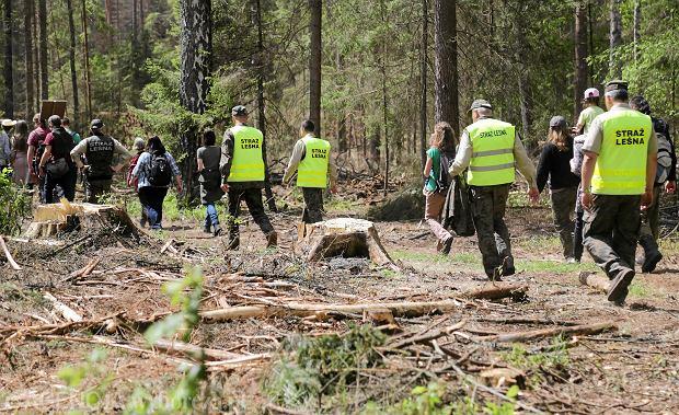 Tak sprzedają drewno z Puszczy. Tylko w zeszłym tygodniu na aukcji był świerk za 330 tys. zł