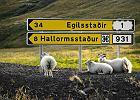 """Na zdjęciu: owce odpoczywają pod islandzkim kierunkowskazem. Islandia to kraj dla koneserów: najczystszego powietrza i rzek w Europie, wielkich pustkowi, księżycowych krajobrazów, surowej przyrody. W Islandii można zobaczyć zorzę polarną i gejzery, wygrzać się w gorących źródłach i zmarznąć podczas trekkingu przez góry i lodowce. Wyspa """"na chmurnej Północy"""" wcale nie jest szara, wręcz przeciwnie - oferuje całą gamę kolorów, które tylko natura potrafi stworzyć. Islandia, wbrew powszechnym opiniom, sprzyja turystom z plecakami i śpiworami, choć równie dobrze zaspokoi potrzeby osób, które stać na luksus w podróży."""